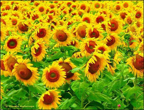 Flower_to_Flower_2.jpg